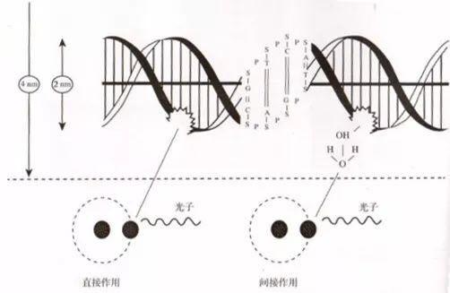 射线与dna分子相互作用示意图